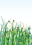 Wilde Gras-Blumen Background_eps Stockfotos
