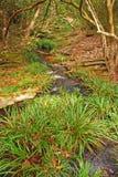 Wilde Gras en Bomen met Kleine Stroom Stock Fotografie