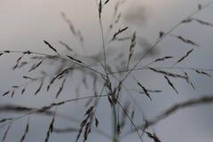 Wilde grasbloemen die in de middag bloeien, royalty-vrije stock afbeeldingen