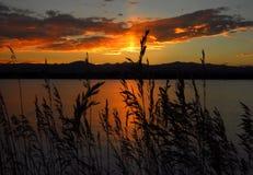 Wilde grassen en zonsondergang Stock Fotografie