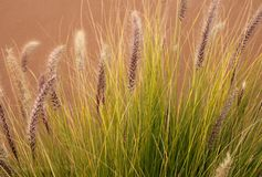 Wilde Grassen in Middaglicht Stock Foto's