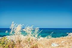 Wilde grassen op de overzeese kust, het eiland van Kreta, Griekenland Royalty-vrije Stock Afbeeldingen