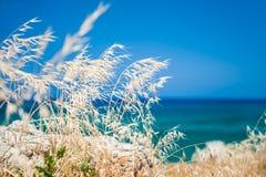 Wilde grassen op de overzeese kust, het eiland van Kreta, Griekenland Stock Fotografie