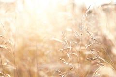 Wilde grassen op een gebied royalty-vrije stock foto's