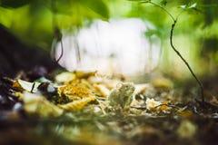 Wilde hölzerne Maus, die auf dem Waldboden sitzt Lizenzfreies Stockfoto