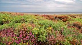 Wilde Heide durch das Meer lizenzfreies stockfoto