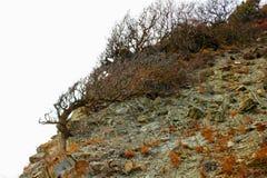 Wilde heuvelkant met bochtige bomen en struiken, de herfst royalty-vrije stock foto's