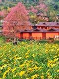Wilde Himalajakirsche, rosa Blume, rosa Berg, lizenzfreie stockfotografie