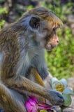 Wilde Holding des Affen Blumen Stockfoto