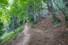 Wilde Holzlandschaft Stockfotografie
