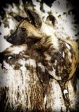 Wilde hond royalty-vrije stock foto's