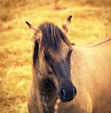 Wilde horse. Portrait of wilde horse at sunset Royalty Free Stock Image