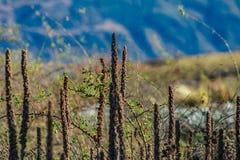 Wilde installaties voor berglandschap, Nieuw Zeeland stock foto's