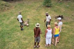 Wilde jachtluipaard in Casela-park, Mauritius Stock Afbeeldingen