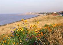 Wilde Küstenblumen Stockfoto