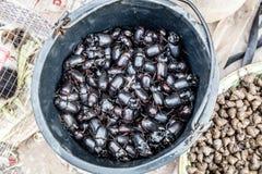 wilde kakkerlakken bij markt stock foto's