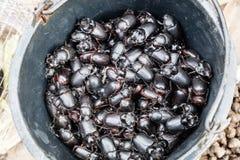 wilde kakkerlakken bij markt stock afbeeldingen