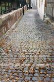 Wilde Kastanien, auf Kopfsteinstraße, eurpe Lizenzfreies Stockfoto