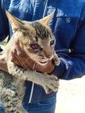 Wilde kat stock afbeelding