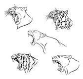 Wilde kat stock illustratie