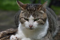 Wilde kat stock foto's