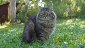 Wilde kat Royalty-vrije Stock Afbeeldingen