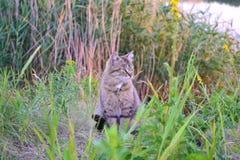 Wilde kat Stock Fotografie