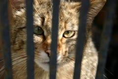 Wilde kat in de kooi Stock Afbeelding