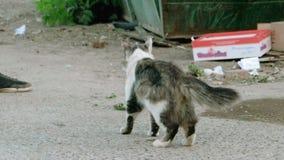 Wilde kat in de straat stock video