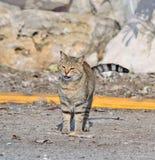 Wilde kat op de rand van de weg stock afbeelding
