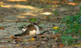 Wilde kat in wildernis Stock Foto's