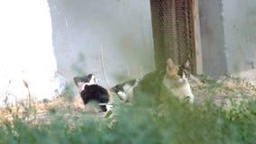 Wilde kattenfamilie die in gras rusten stock videobeelden