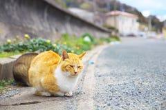 Wilde Katze Lizenzfreies Stockbild