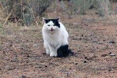 Wilde Katze in der Wüste Stockfotografie