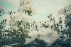 Wilde kleine bloemenwijnoogst Stock Afbeeldingen