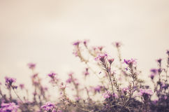 Wilde kleine bloemenwijnoogst Stock Fotografie