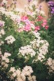 Wilde kleine bloemenwijnoogst Royalty-vrije Stock Fotografie