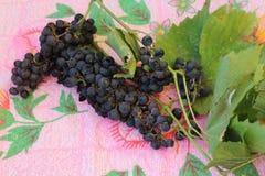 Wilde kleine zwarte gerijpte druiven Royalty-vrije Stock Afbeeldingen