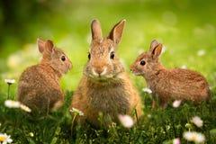 Wilde konijntjes in de weide stock fotografie