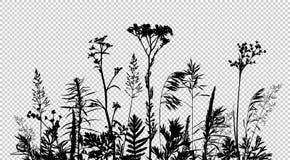 Wilde Kraut- und Blumenschattenbilder lokalisiert auf transparentem Hintergrund vektor abbildung
