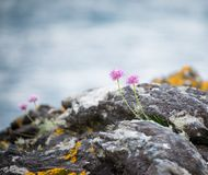 Wilde kustbloemen stock foto's