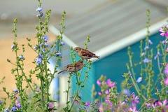 Wilde kustbloemen en vogels Stock Fotografie