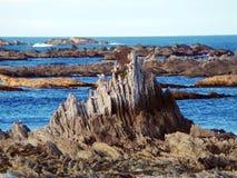 Wilde Landschaft, Kaikoura, Neuseeland Lizenzfreie Stockfotografie