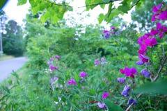 Wilde Leeuwebekken langs een kant van de weg stock fotografie