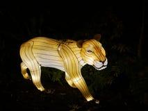 Wilde lichten, leeuw in Dublin Zoo bij nacht Stock Foto
