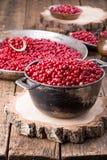 Wilde lingonberry vossebesfoxberry, stock afbeelding