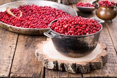 Wilde lingonberry vossebesfoxberry, stock fotografie