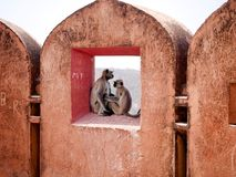 Wilde? In Love in Jaigarh Fort royalty free stock photo
