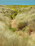 Wilde Lupine en kustgras Stock Foto