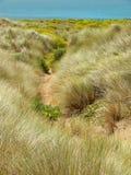 Wilde Lupine und Küstengras Stockfoto